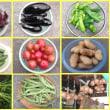 我が家の夏野菜