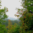 秋雨の山、歩き、は、しっとりとした趣に心地よい