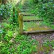 森の遊歩道(17)~3の1