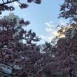 辛うじてあたみ桜を見る事が出来ました。
