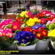 image2492 ジュリアン-隣は春
