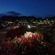 山口ゆめ花博(夜2)・山口市