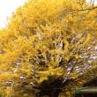 黄金の光につつまれて・・・熊野古道
