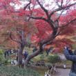 2017京都紅葉の旅(その2)嵐山の祇王寺、二尊院、常寂光寺、竹林、天竜寺、宝厳院そして高台寺