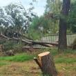 長居植物園の被害は大きい!