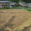今朝の田んぼ