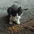 似てる猫ちゃん