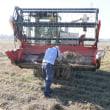 納豆小粒の収穫作業。