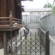 荻窪・白山神社(杉並・上荻)