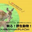 【終了】第8回 観る!野生動物!ひいばあちゃん から やしゃご まで