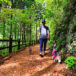 都民の森ハイキング(その2)