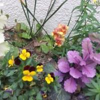 今、咲いてる花