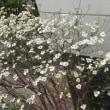 いま満開の花
