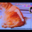 2/22 生き物に このおっさん座りの猫