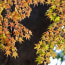 松戸東禅寺の紅葉