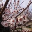 春ですね~!