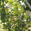 小さな木の実があるよ、コサメビタキ。