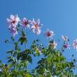 花木の植え替え