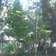 下末吉愛宕神社境内の樹木