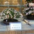 「びっくり九州とちょっぴり京都散歩4日間」(その3)2018年5月19日(土)