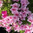 気を補う春の薬膳
