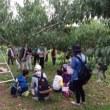 町内会のイベント、果樹園と小樽へ