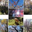 惜秋の皿ヶ嶺
