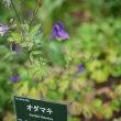 α99Ⅱ+TAMRON SP35mm f/1.8 Di USD 武蔵丘陵森林公園植物園8