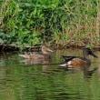 湿地で鳥見