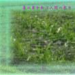 『 麦の芽や和は人間の底力 』平和の砦575交心zsk0701