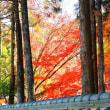 水車茶屋の紅葉
