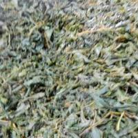 ニルギリ紅茶の生産地へ その3