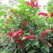 夏に咲く庭の花
