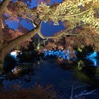 光のフェスタ ~ モネの庭から(その336)