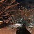 冬の夜の公園