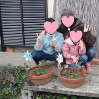苺の苗を鉢植え