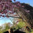 春の花木の花盛り、イースター前のこれがまさかの夏の気温の金曜日