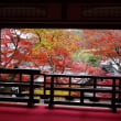 柳谷観音・揚谷寺の紅葉