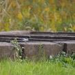 日曜散歩2:鳥たち、名前のわからない植物