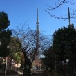 東京の色んな木