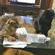 8月の猫は学習する。