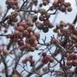 実りの秋です!色づくオリーブ、フェイジョア、イチゴ他