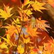 fotolia「紅葉の彩り」 加治丘陵版もう一枚なり