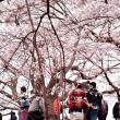 桜を撮る人を撮る