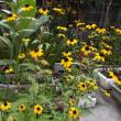 庭に咲いている花とゴウヤ