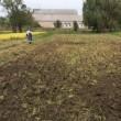 収穫 田んぼの学校