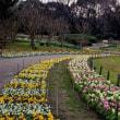 長居植物園 水仙&蝋梅など