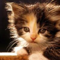 老後はやはり猫ですか?更新済み!