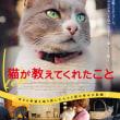 【dairy】『猫が教えてくれたこと』監督ティーチイン付き試写会(感想は後日)