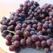 葡萄が熟した♬